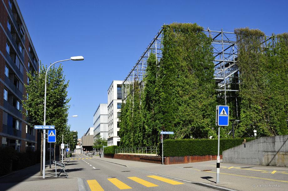 MFO-Park, ulica, pnącza