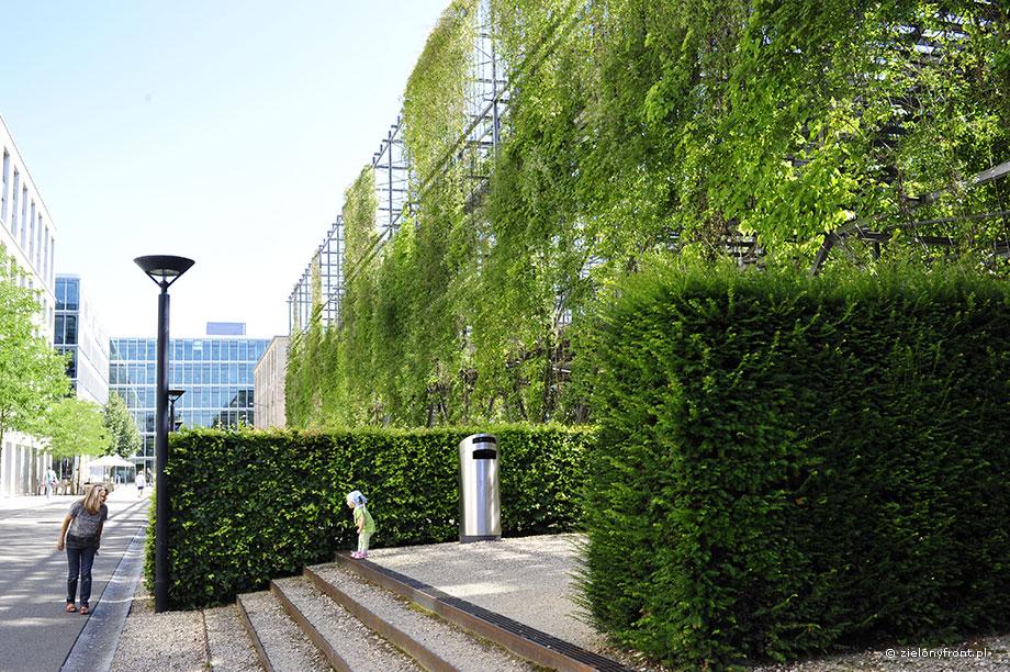 Zurych Park MFO, zielonyfront