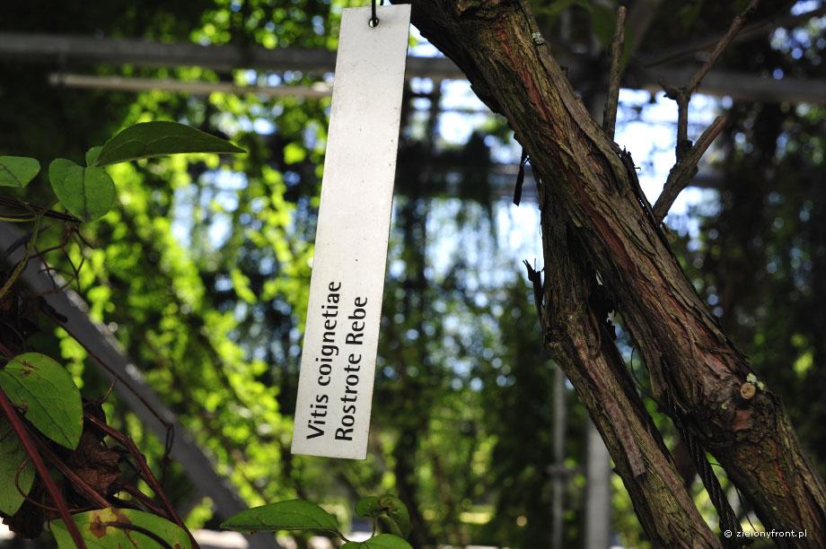 MFO Park plant label
