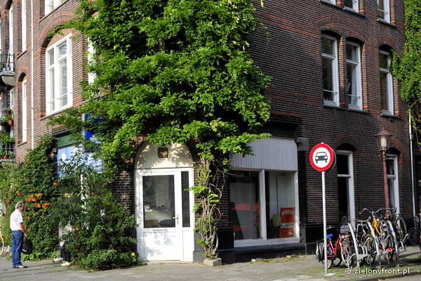 Glicynia w Amsterdamie